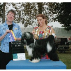 Black and white Tibetan Terrier poses for a win photo