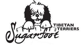 Sugarfoot Tibetan Terriers
