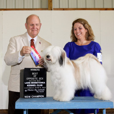 A white Tibetan Terrier receives ribbons at a dog show